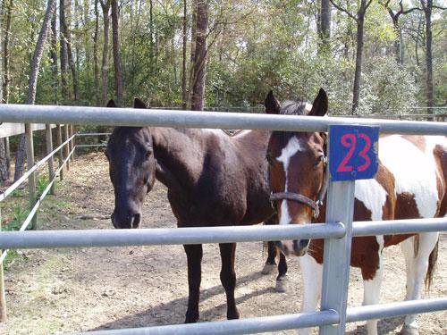 horseslookingout2.jpg